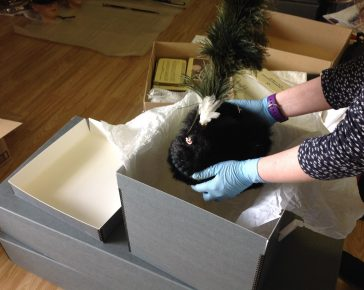 Caring for the Collections: Collections manager places a Light Infantry hat into a box at Cornwall's Regimental Museum