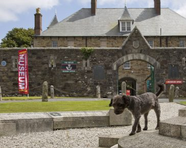 Spingo the museum dog at Cornwall's Regimental Museum, a dog friendly attraction.