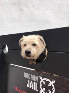 Tilly the Terrier at Bodmin Jail