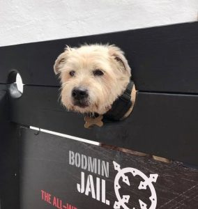Dog friendly - Tilly the Terrier at Bodmin Jail
