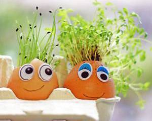 Cress Head Creative Challenge